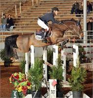 Willow Tree Warmbloods Michelle Beck